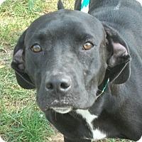Adopt A Pet :: Hermine - Martinsville, IN