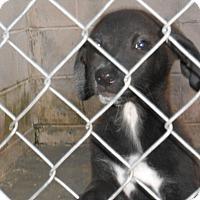 Adopt A Pet :: Mona - Falls Mills, VA