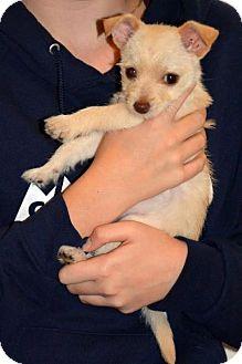 Terrier (Unknown Type, Medium) Puppy for adoption in Arlington, Washington - Sierra Bella