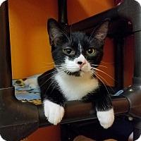 Adopt A Pet :: Alejandro - Elyria, OH