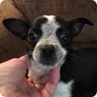 Adopt A Pet :: Miguel & Margarita - Westfield, NY