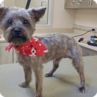 Adopt A Pet :: Lorenzo - Wildomar, CA