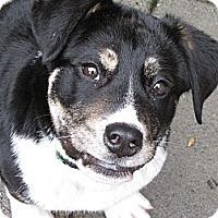 Adopt A Pet :: Clyde - Surrey, BC
