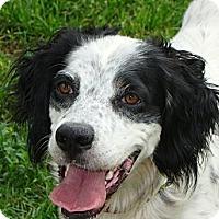 Adopt A Pet :: Cassie - Columbus, OH