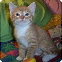 Adopt A Pet :: Fred - Reston, VA