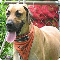Adopt A Pet :: Dozer - York, PA