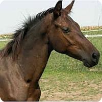 Adopt A Pet :: Mahave - Dewey, IL