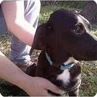 Adopt A Pet :: Charlie - Needville, TX