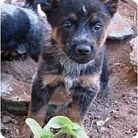 Adopt A Pet :: Cleveland *ADOPTION PENDING* - Phoenix, AZ