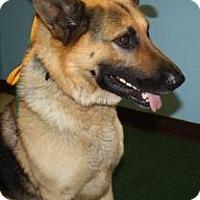 Adopt A Pet :: Hans - Hamilton, MT