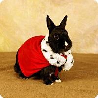 Adopt A Pet :: Roy - Portland, ME