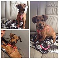 Adopt A Pet :: Austin - Chicago, IL