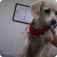 Adopt A Pet :: SUGER - Conroe, TX