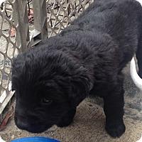 Adopt A Pet :: Leni - Daleville, AL