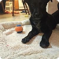 Adopt A Pet :: Maisy - Joliet, IL