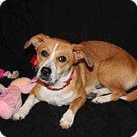 Adopt A Pet :: Allison - Trenton, NJ