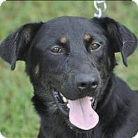 Adopt A Pet :: Eli - Osage Beach, MO