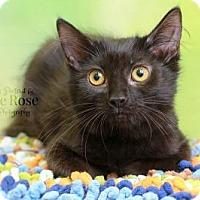Adopt A Pet :: Radisson - Sterling Heights, MI