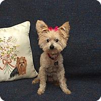 Adopt A Pet :: Lady - Newfield, NJ