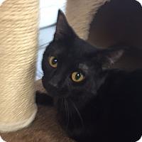 Adopt A Pet :: Apollo - San Leon, TX