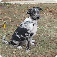 Adopt A Pet :: MYSTIC - Hartford, CT