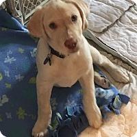 Adopt A Pet :: Barley - Carlsbad, CA