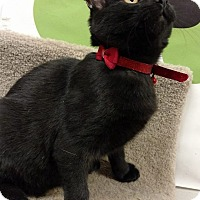 Adopt A Pet :: Peggy - Bensalem, PA