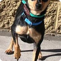 Adopt A Pet :: Skyler - Gilbert, AZ