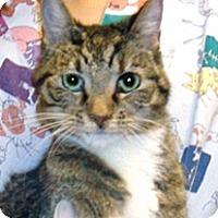 Adopt A Pet :: 326070 - Wildomar, CA