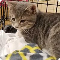 Adopt A Pet :: ASH - LaGrange, KY