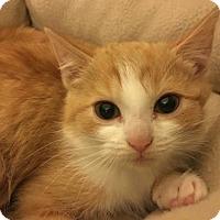 Adopt A Pet :: Lancaster - Los Angeles, CA