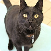 Adopt A Pet :: Panther - Bradenton, FL