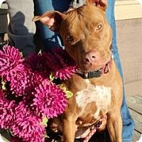 Adopt A Pet :: Rudy - Justin, TX