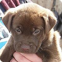 Adopt A Pet :: Sally - Columbus, IN