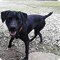 Adopt A Pet :: Balto - Charlotte, NC