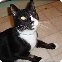 Adopt A Pet :: Big Cody - Hamburg, NY