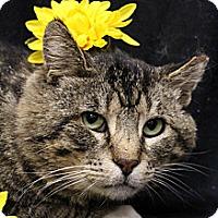 Adopt A Pet :: Clooney - Sacramento, CA