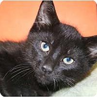 Adopt A Pet :: TIBET - SILVER SPRING, MD