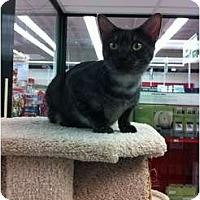 Adopt A Pet :: Diva - Phoenix, AZ