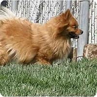 Adopt A Pet :: Patti - Meridian, ID