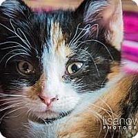 Adopt A Pet :: Athena - Montreal, QC