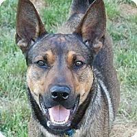 Adopt A Pet :: Big Al - Matthews, NC