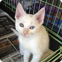 Adopt A Pet :: Memphis - Island Park, NY
