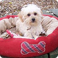 Adopt A Pet :: Skipper - Antioch, IL