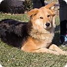 Adopt A Pet :: Mabel