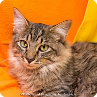 Adopt A Pet :: Chance - Fountain Hills, AZ