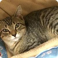 Adopt A Pet :: Monica - Furlong, PA