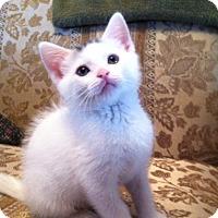 Adopt A Pet :: Kat - Trevose, PA