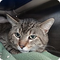 Adopt A Pet :: Snickers - Elyria, OH