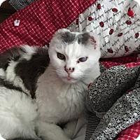 Adopt A Pet :: Elijah - Boise, ID